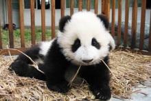 パンダって…(゜o゜)
